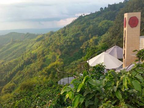 Tour de Café en Quindío