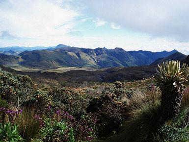 Los Nevados National Park   Photo  Los Nevados National Park