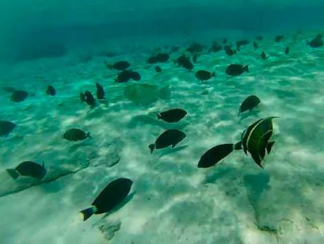 Tour to Johnny Cay & Natural Aquarium