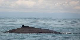 Observação de Baleias no Pacífico