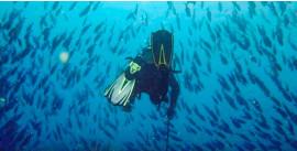 Baru Island Scuba Diving Day Tour